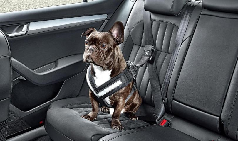 Skoda dog seat belt