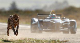 Formula E car vs cheetah