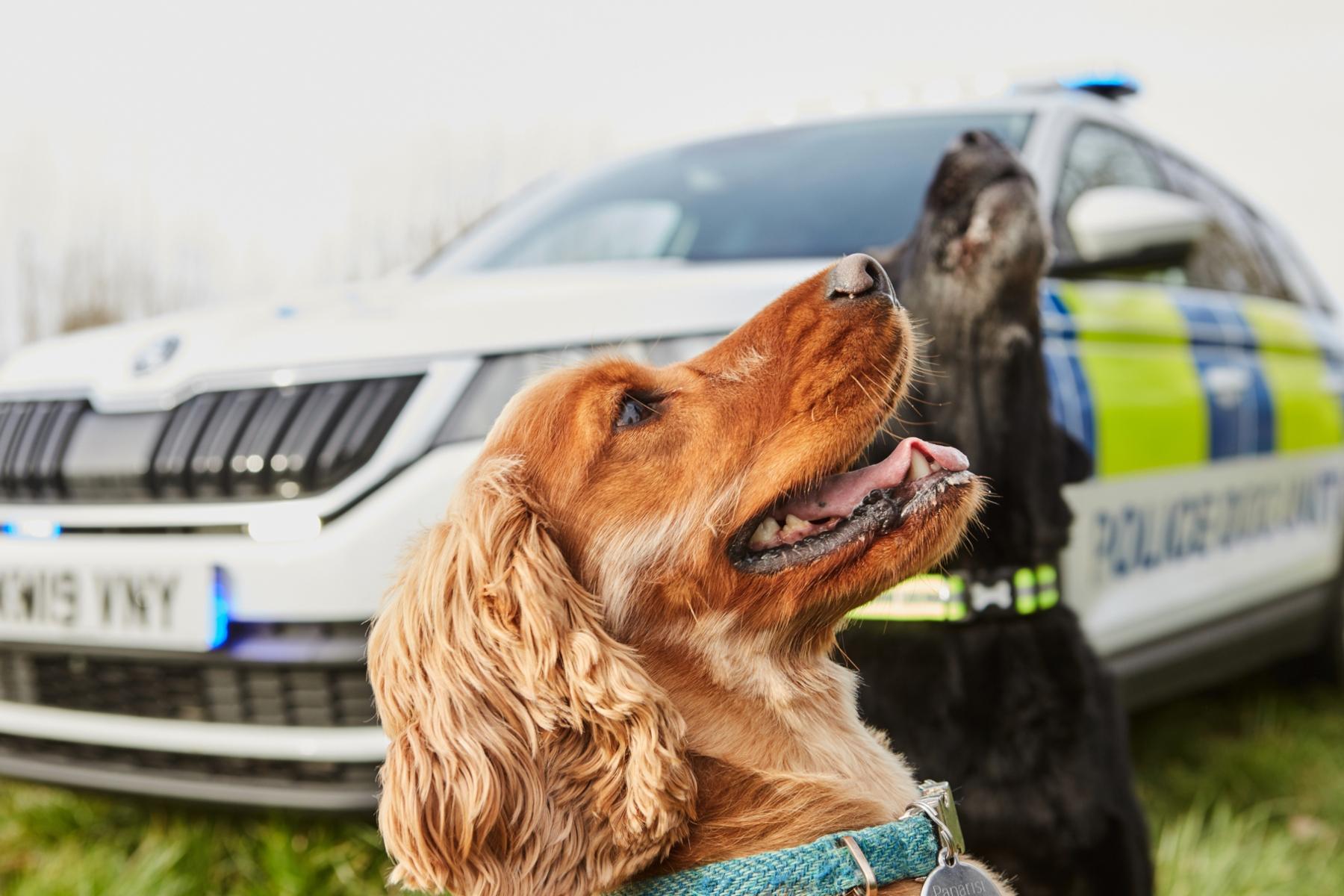 Skoda Kodiaq police dog unit