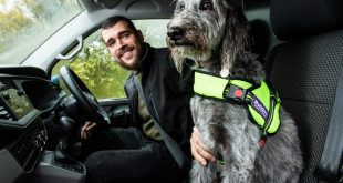 Van-driver-with-his-dog