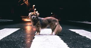 Animal-road-death-toll-report-by-GoCompare