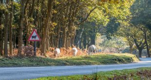 GEM country road hazards