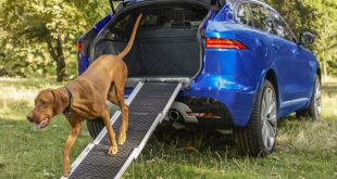 Dog-friendly Jaguar F-Pace