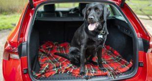 Dog in a car c/o of www.cargurus.co.uk