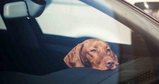 Dog in a car - GEM Motoring Assist
